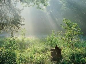 Лесной массив Русский лес